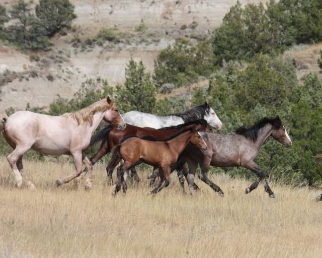 wild.horses.slideshow.4.original.jpg